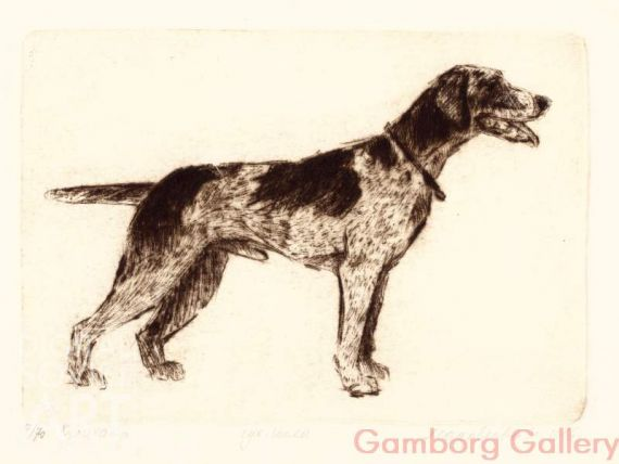 German Shorthaired Pointer – Курцхаар